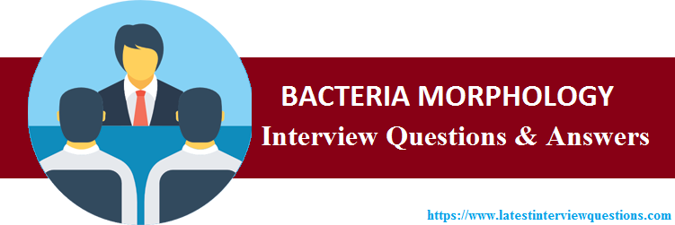 Interview Questions on BACTERIA MORPHOLOGY