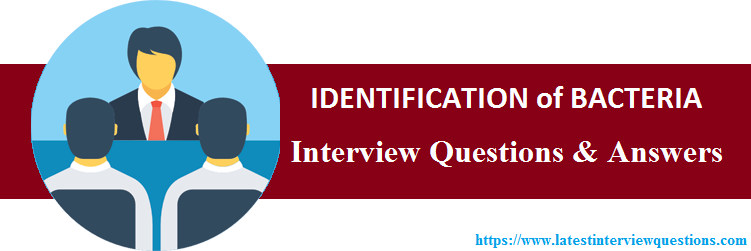 Interview Questions on IDENTIFICATION of BACTERIA