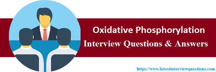 Interview Questions On Oxidative Phosphorylation