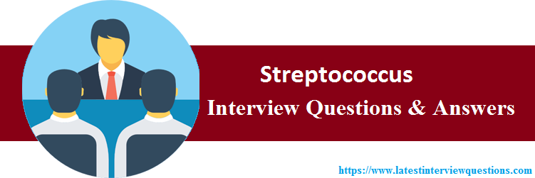 Interview Questions On Streptococcus